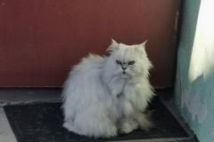 Kot wygląda na złego