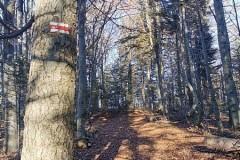 Czerwonym szlakiem na Sychlec