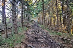 Ładne lasy