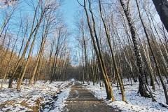 Wchodzimy do lasu
