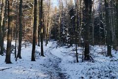 Pierwsze oznaki śniegu