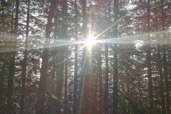 Słońce przebija się między drzewami