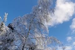 Piękny zimowy klimat
