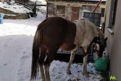 Jest i koniu
