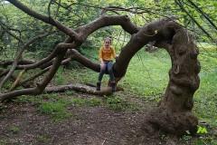 Drzewko w parku