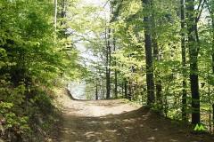 Leśny odcinek