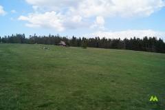 Rozległy widok na polanę