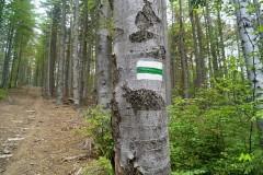 Zielonym szlakiem na Muńcuł