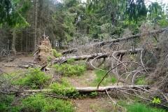 Powalone drzewa na szczycie