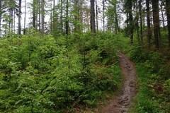 Podejście zielonym szlakiem w stronę Wielkiej Rycerzowej
