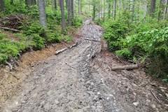 Szlak zmasakrowany przez wycinkę drzew