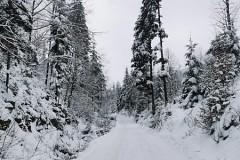 Zimowy szlak