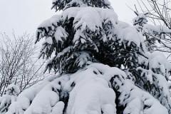 Dawno my tyle śniegu nie widzieli
