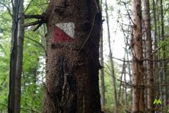 Czerwona ścieżka spacerowa