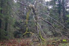 Takie drzewko