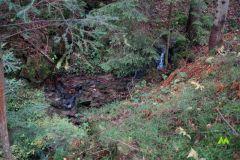 Potok w środku lasu