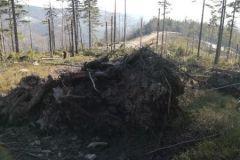 Kolejne połamane drzewa