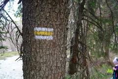 Żółtym szlakiem na Halę Kamińskiego
